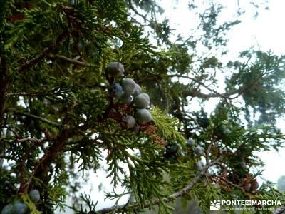 Enebral, Ermita Hornuez–Villa Maderuelo; viajes culturales; excursiones desde madrid